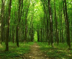 árboles en italiano